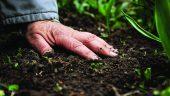 Hand on Soil